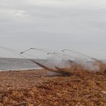 Cannon net firing on beach