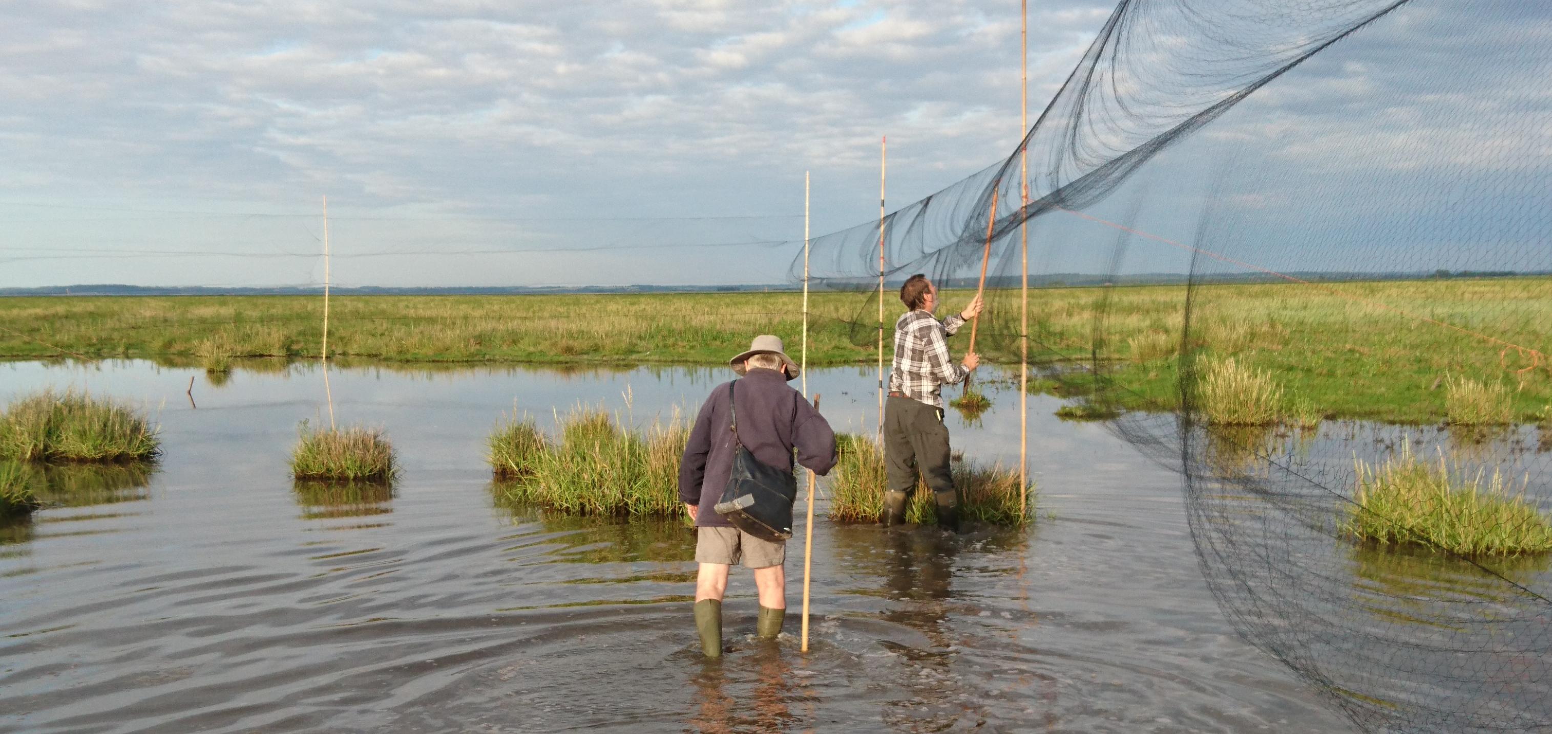 Setting mist nets