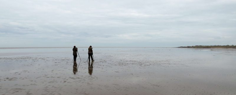 Resighting waders on Heacham Beach, by Cathy Ryden