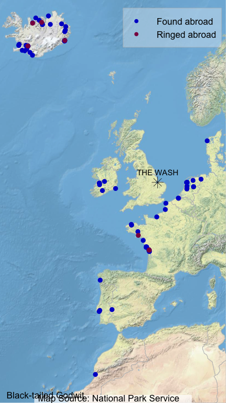 Map showing where Wash-ringed Black-tailed Godwits have been found abroad (blue dots) and where foreign-ringed birds that have been encountered on The Wash were ringed (maroon dots)