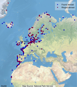 Map shows where Wash-ringed Dunlin have been found abroad (blue dots) and where foreign-ringed birds that have been encountered on The Wash were ringed (maroon dots).