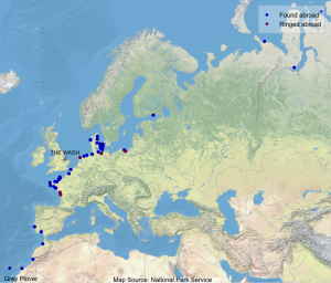 Map showing where Wash-ringed Grey Plovers have been found abroad (blue dots) and where foreign-ringed birds that have been encountered on The Wash were ringed (maroon dots).