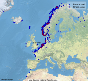 Map showing where Wash-ringed Oystercatcher have been found abroad (blue dots) and where foreign-ringed birds that have been encountered on The Wash were ringed (maroon dots).
