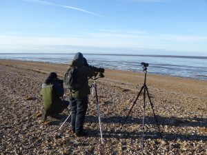 Resighting on Snettisham Beach, by Jenny Spencer-Jones