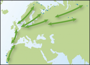 Map showing movements of Bar-tailed Godwits from Time to Fly by Jim Flegg.