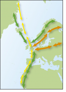 Map showing movements of Dunlin, from Time to Fly by Jim Flegg.