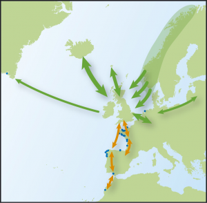 Map showing movements of Oystercatchers, from Time to Fly by Jim Flegg.