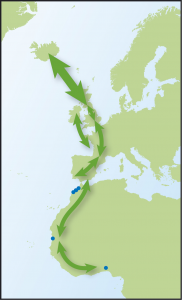 Map showing movements of Redshank from Time to Fly by Jim Flegg.