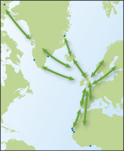 Map showing movements of Ringed Plover, from Time to Fly by Jim Flegg.