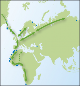 Map showing movements of Sanderling, from Time to Fly by Jim Flegg