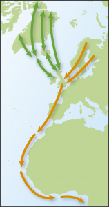 Map showing movements of Turnstone from Time to Fly by Jim Flegg