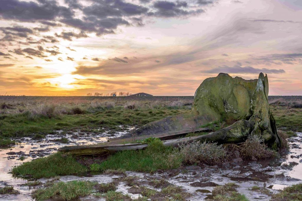 Whale bone on Terrington Marsh, by Ruth Walker