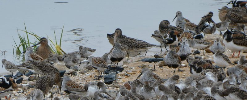 Waders on the beach, by Cathy Ryden