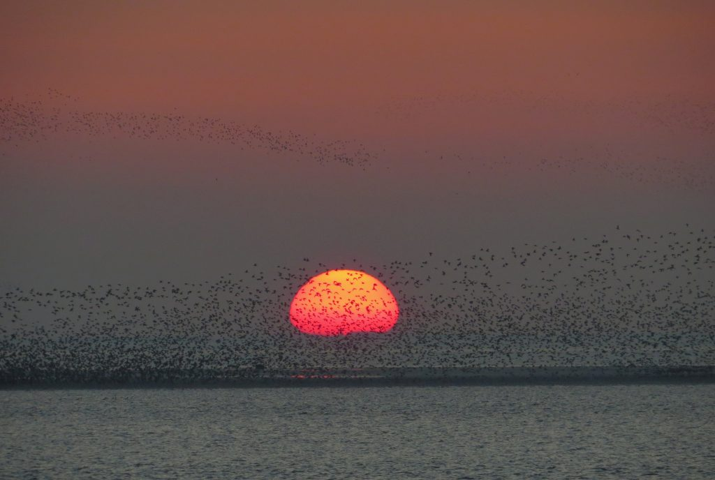 Sunset at Snettisham, by Cathy Ryden
