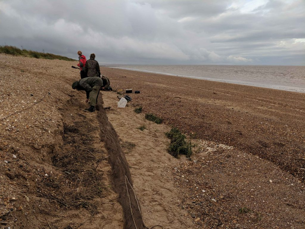 Setting nets on Snettisham Beach, by Chantal Macleod-Nolan