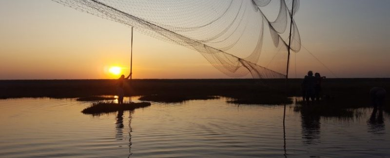 Mist nets at sunset, by Katharine Bowgen