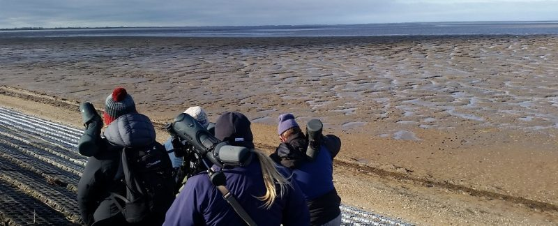 Resighting birds at Snettisham, by Sara Miller