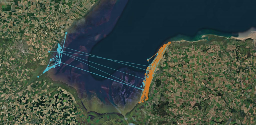 Map showing the movements around The Wash estuary of two tagged Oystercatchers.